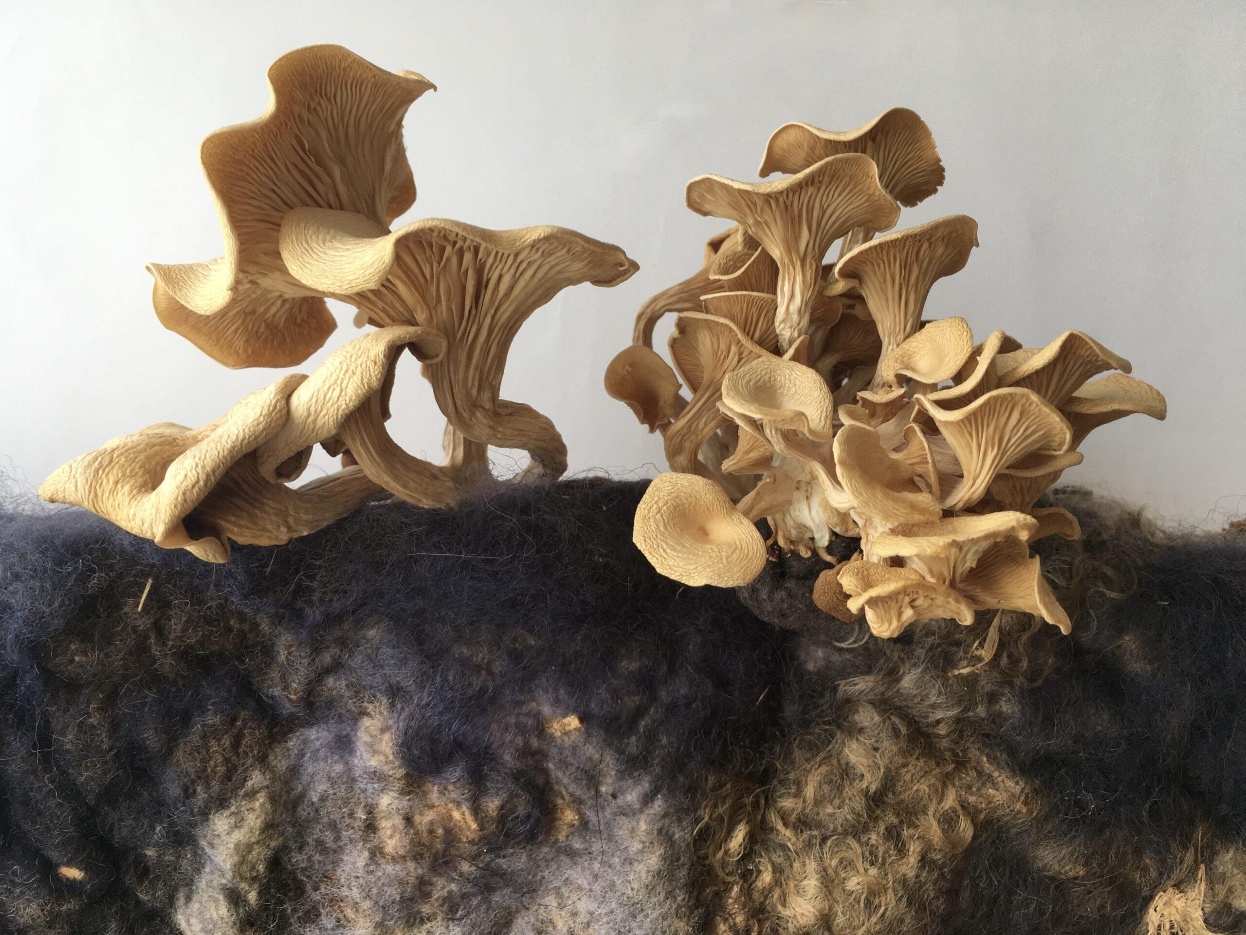Fungus felt fusion